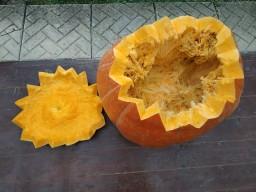 The Biggest Pumpkin from our Garden Carved Minecraft Blog